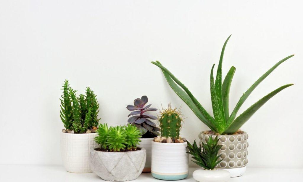 coworker gift ideas- succulent plant